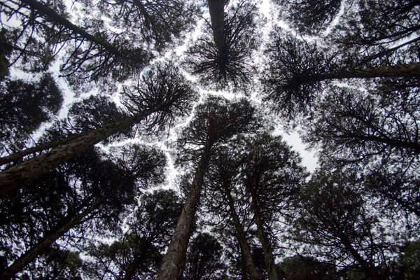 Parque das Sequóias em Canela