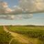 Enoturismo: 5 passeios imperdíveis no Vale dos Vinhedos